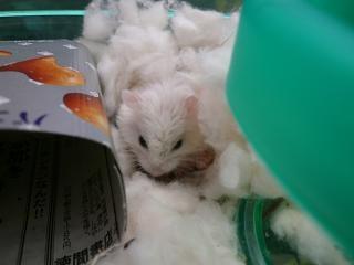 ☆ハムsの足跡☆ verⅡ-しろ綿好き