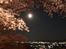 だんだん×日常×アルバム。-夜桜