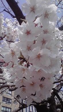 バツイチ独身 ~セフレとボクと、時々、不倫~-桜