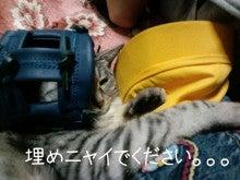 スス♀+ぶー♂ログ ~黒猫とアメショMIX+その下僕~