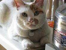 CatあんどDogsな日記。