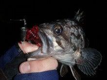 Fishing Blog OFFSHORE CRAZY! ~ 夢は一発大物!   鮪だ!鰤だ!大政だ!巨カンパだ!大鯛だ!なんでもこ~い!-そい