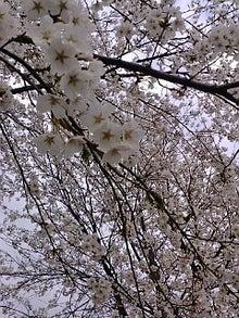 空谷の跫音-F1001901.jpg