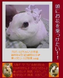 らびちゃんへの手紙-t02200272_0336041610165925529.jpg
