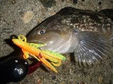 Fishing Blog OFFSHORE CRAZY! ~ 夢は一発大物!   鮪だ!鰤だ!大政だ!巨カンパだ!大鯛だ!なんでもこ~い!-あいなめ