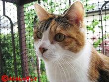 カミさんとダンナの猫ブログ-ミドリ