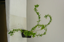 ここで、そこで、いろんなところで-ikebana-4