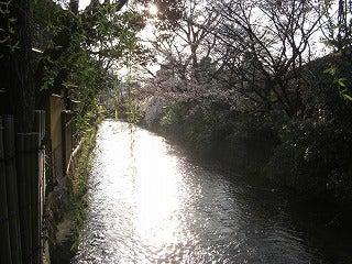 あひるるる-京都