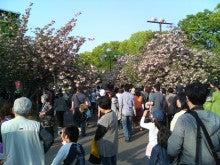 R-patrol ~新しきぼくの光と道~-造幣局 桜の通り抜け