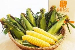 「ひろんぐー」の つぶやき @名古屋-杉本農産