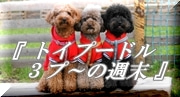 『 funDogs 』