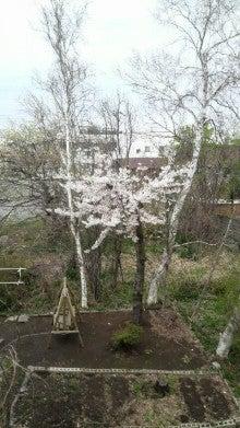 ある教会の牧師室-桜