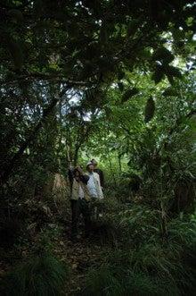 小笠原エコツアー情報      エコツーリズムの島        小笠原の旅情報と小笠原の自然-4.27