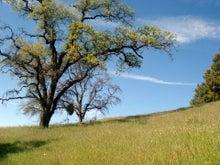 有閑マダムは何を観ているのか? in California-Henry Coe