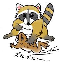 川崎悟司 オフィシャルブログ 古世界の住人 Powered by Ameba-ヒキガエルを地面にこするアライグマ