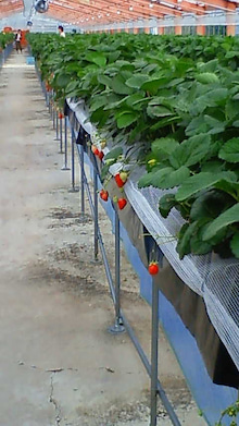 三十路の歩き方-image.jpg