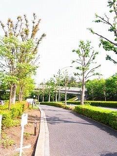 新谷良子オフィシャルblog 「はぴすま☆だいありー♪」 Powered by Ameba-春の香り。
