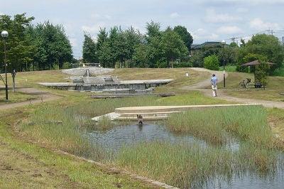 七里・大和田 地域探訪ブログ-七里総合公園_池2