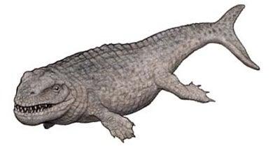 Dakosaurus Andiniensis - 34.2KB
