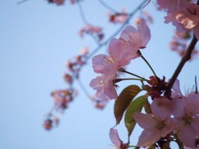 食べて飲んで観て読んだコト-桜