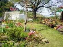 はなさかおやじの庭は春真っ盛り