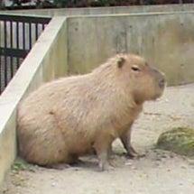 ああ上野動物園♪