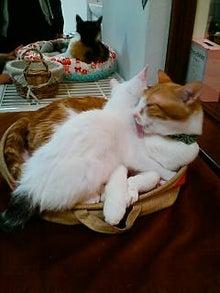 ワークライフバランス 大田区の女性社長日記-猫カフェ2