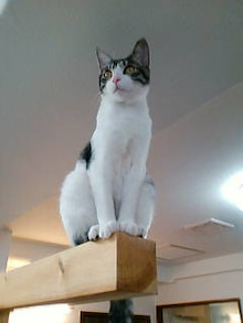 ワークライフバランス 大田区の女性社長日記-猫カフェ1