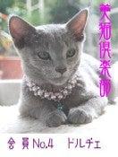ネコのいる生活 -Ⅰ love しゃのん&びわ&ドルチェ -