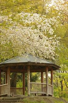 毎日はっぴぃ気分☆-休憩所の桜