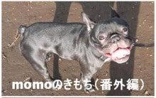 momoのきもち
