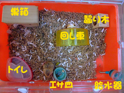 ねずねずちゅーちゅー-siiku09_05_08_1