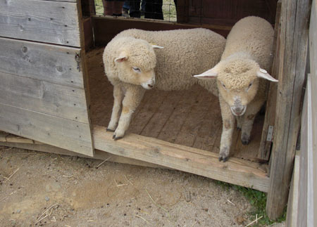 くぅ ねる あそぷ。-子羊