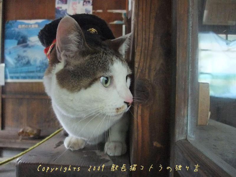駅長猫コトラの独り言~旧 片上鉄道 吉ヶ原駅勤務~-なんだろね?