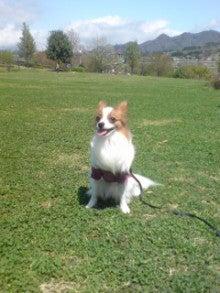 ★Riku-BLOG★我が家のお犬様*親ばか日記-20090422111401.jpg