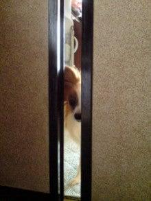★Riku-BLOG★我が家のお犬様*親ばか日記-20090501093542.jpg