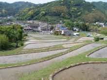 ぽれぽれカエルが雨に鳴く-miura17