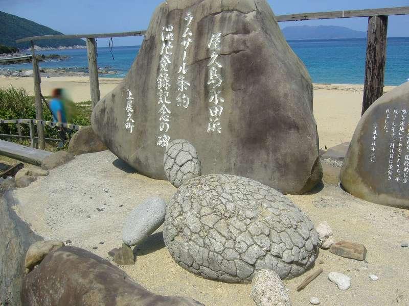 ウチのゴハン-屋久島 永田浜
