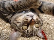 momoの猫日記-何か用?