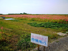 おおむた健老町「大ひまわり畑」&「ポピー畑」