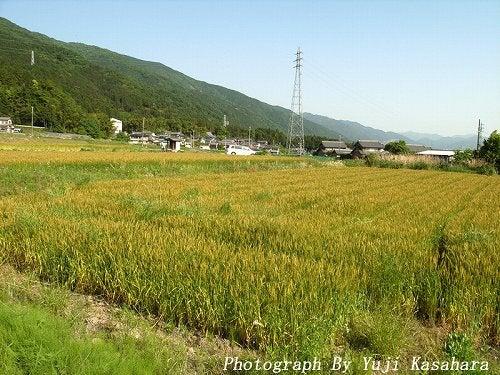 写真徒然日記-mugisyuukaku