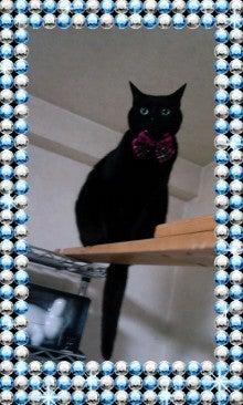 スス♀+ぶー♂ログ ~黒猫とアメショMIX+その下僕~ -090517_1655~010001.jpg