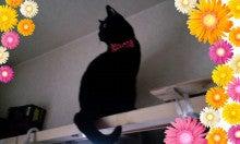 スス♀+ぶー♂ログ ~黒猫とアメショMIX+その下僕~ -090517_1426~020001.jpg