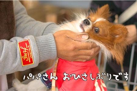 M&L★ケセランパサラン日記