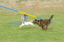 ピートとDoggyでRockな毎日。-run!!!
