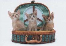 猫にごはん♪-ナッツちゃん&ネオくん&ラムちゃん