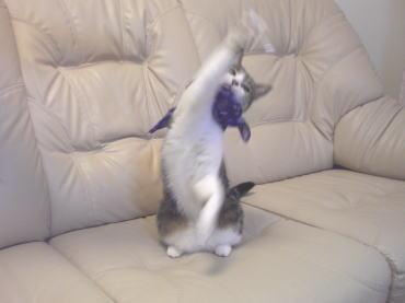 くぅちゃんだって猫である。-遊ぶ2