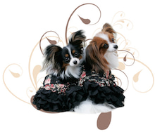 DOG Fashion COLLECTION of 東京
