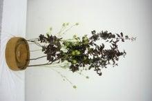 ここで、そこで、いろんなところで-ikebana3