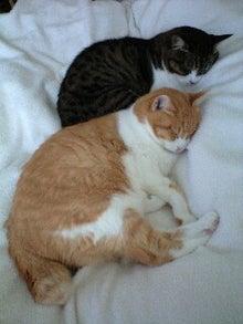ずれずれブログ…湘南で猫と暮らせば…-090525_1559~0001.jpg